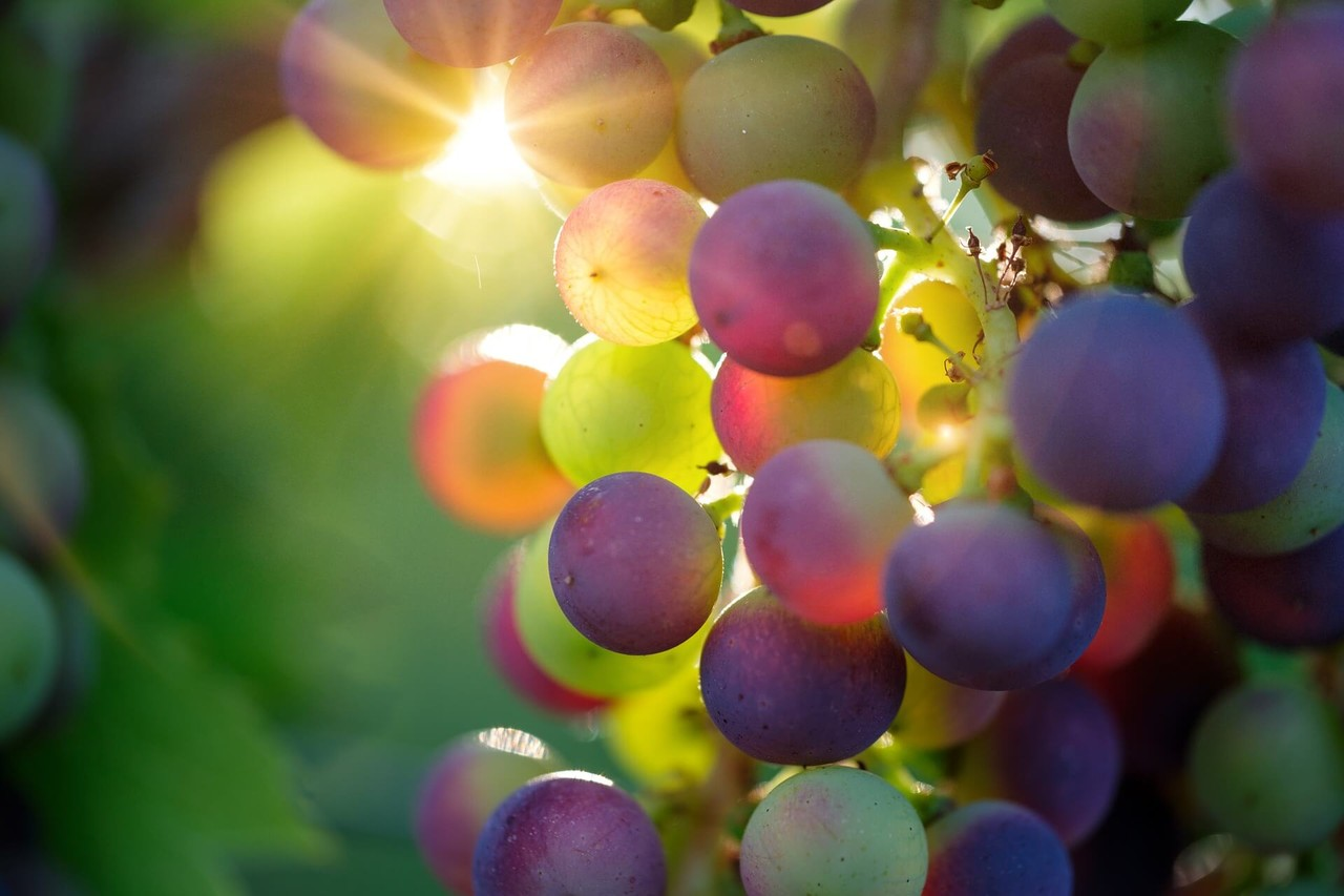 """Picture for article """"Vancouver Island puts the VI in Vino"""""""