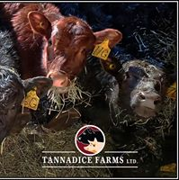 Tannadice Farms Ltd logo