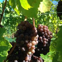 Carbrea Vineyard & Winery logo