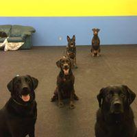 Dogstar Doggie Playcare logo