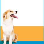 Champion Veterinary Healthcare logo