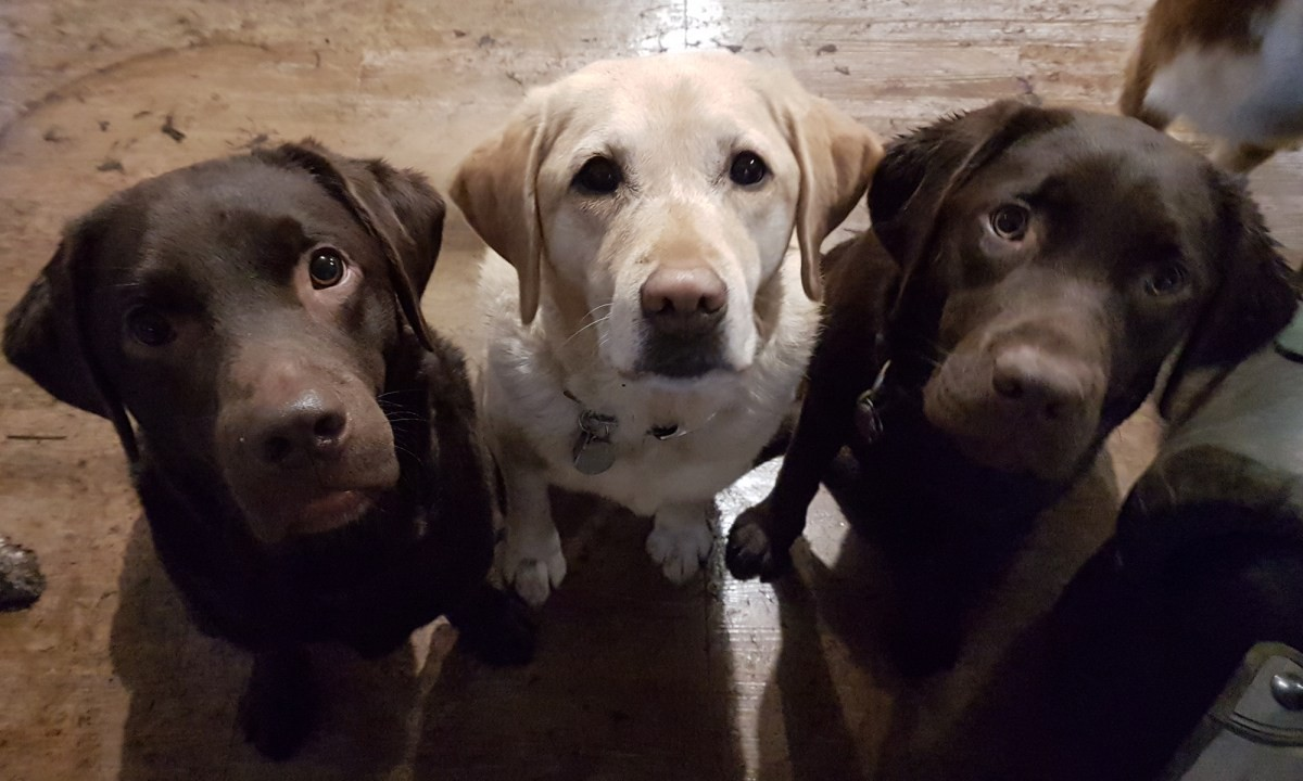 Photo uploaded by Happy Tails Dog Daycare