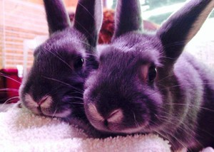 Photo uploaded by Duncan Pets